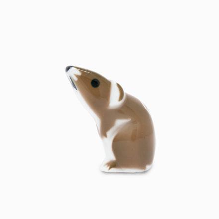 FAUNA / RAT